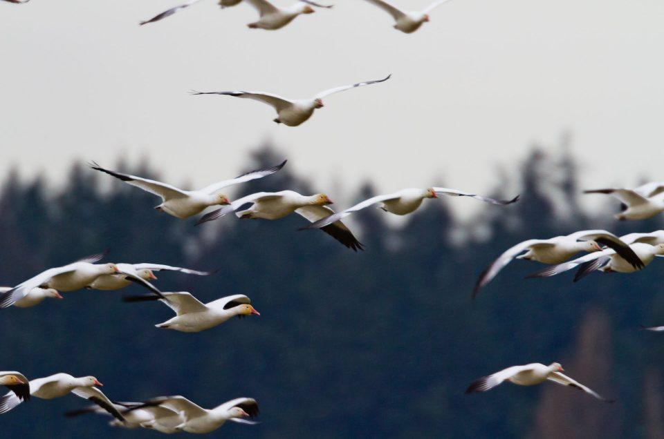 Une conversation avec un observateur d'oiseaux Vincent L'etourneau